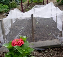 Using row cover and sewing row cover in the organic vegetable