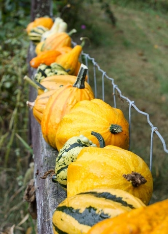 How To Grow Ornamental Gourds In Your Garden With Barbara