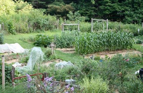 Barbara Pleasant My hillside vegetable garden