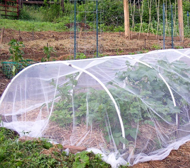 row cover over potatoes and cucumber